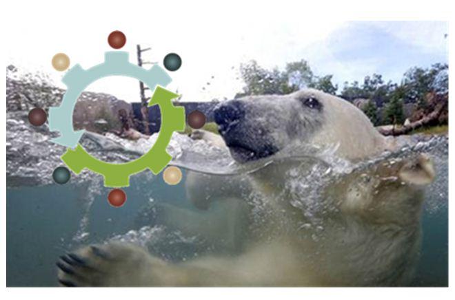 Zoo bear Pict